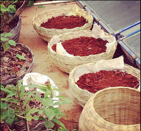 compost for plants