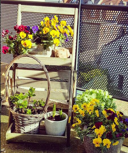 vases of flowers grown on the terrace