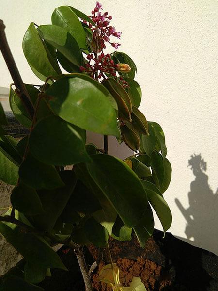 refreshing green plant